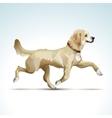 Labrador Retriever Dog vector image