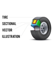 Car tire with layers sectional vector image