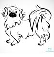 Dog Pekingese vector image