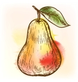 Pear watercolor painting vector image