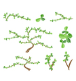 Isometric Set of Bonsai Tree and Green Plants vector image
