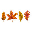 various yellow and orange autumn leaves isolated vector image