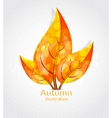 autumn leaves design vector image vector image