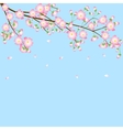 background with cherry blossom branch vector image vector image