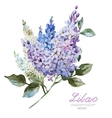 Lilac branch vector image