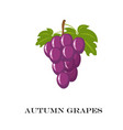autumn purple grapes white vector image