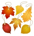 Hanging tags with autumn leaves vector image