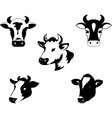 Set of icons with cow Vector Image