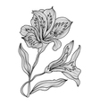 decorative lily flowers vector image