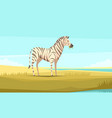 zebra in the wild composition vector image