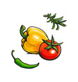 tomato bell chili pepper rosemary bbq spices vector image