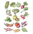 color vegetables vector image