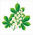 Horse chestnut flower isolated object vector image