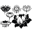 Set of lotuses vector image vector image