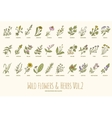 Wild flowers and herbs hand drawn set Volume 2 vector image