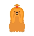 Adorable young lap-dog Yorkshire Terrier vector image