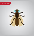 isolated gnat flat icon mosquito element vector image