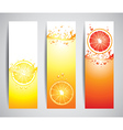 citrus banners vector image