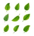Green leaves decorative set vector image