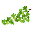maple branch with green leaves vector image vector image