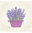 Lavender in the pot vector image