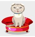 Scottish fold kitten on a red sofa vector image