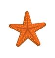 Sea star icon Summer design graphic vector image