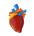 Human heart anatomy medical vector image