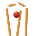 ball cricket in wicket vector image vector image