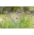 Wild Pink Clover Flowers in the Meadow vector image