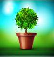 Tree in pot vector image