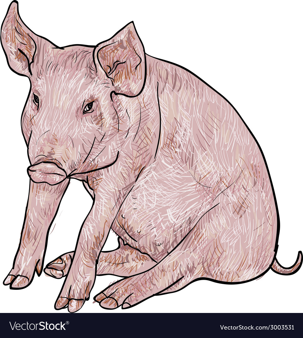 Drawing of pig vector