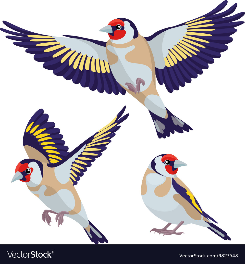 Goldfinch on white background vector