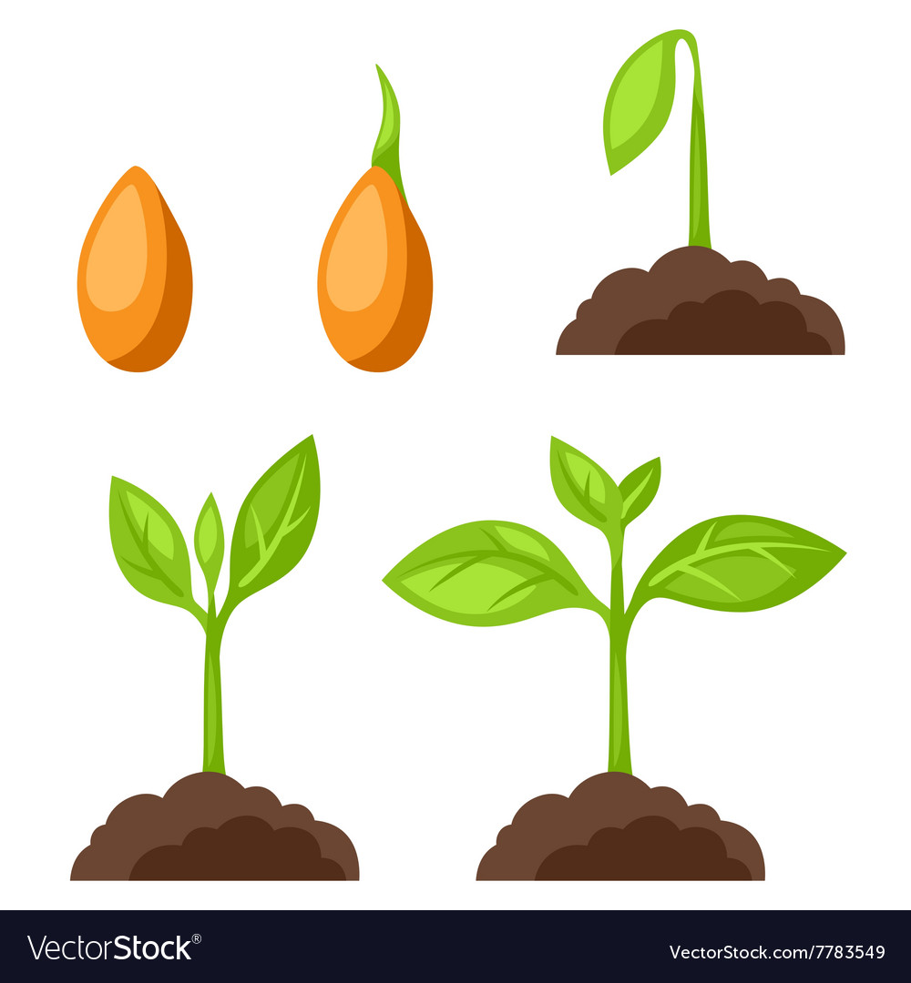 Set of with phases plant growth vector