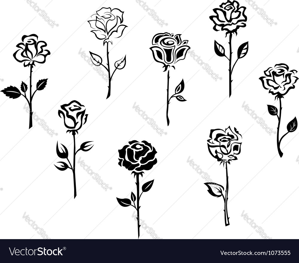 Rose flowers set isolated on white background vector