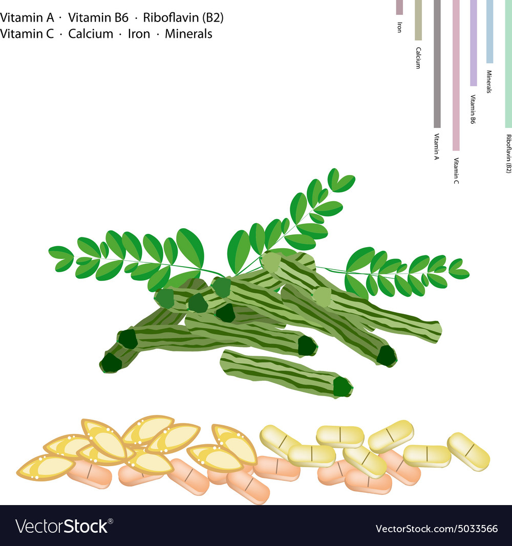 Moringa pods with vitamin a b6 b2 and c vector