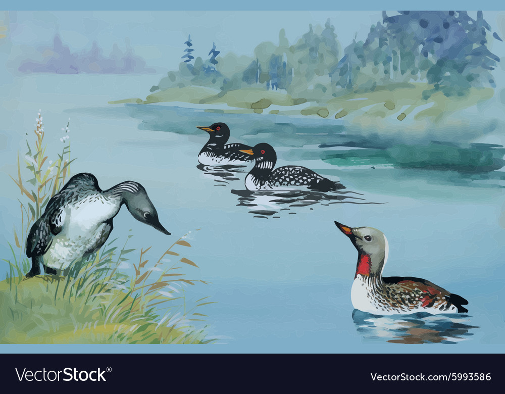 Geese flock swimming on pond watercolor vector