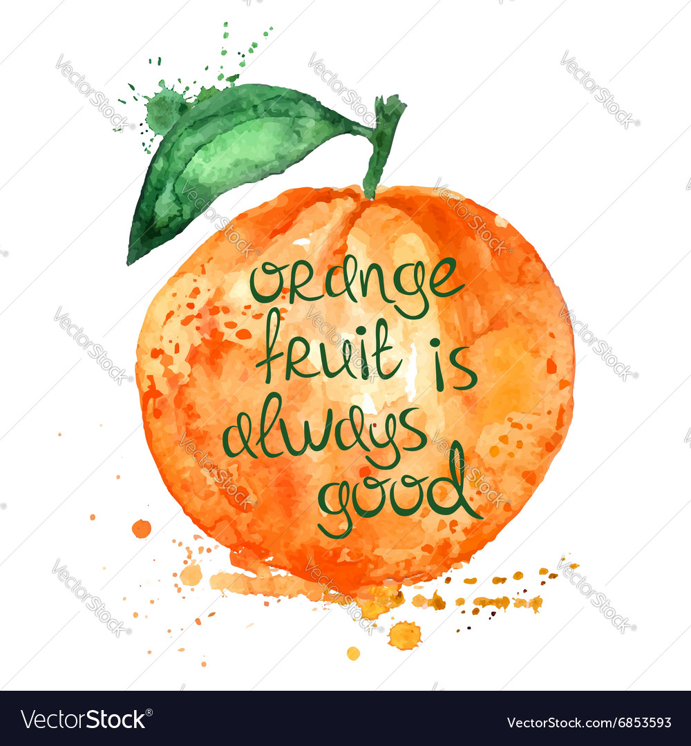 Watercolor of isolated orange fruit vector
