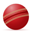 ball for cricet vector image