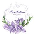 purple freesia flowers vector image