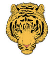 tiger head vector image