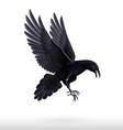 Black raven on white background vector image vector image