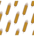 Golden spikelets of wheat seamless pattern vector image vector image