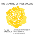 Yellow rose infographics vector image vector image