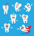 cute happy shiny white tooth characters showing vector image