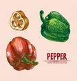 digital detailed line art color pepper vector image