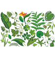 Set of Tropical Leaves vector image vector image