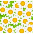 Camomile Daisy Background vector image