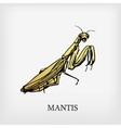 mantis vector image