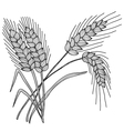 decorative wheat vector image